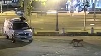 Police help catch roaming mountain lion in downtown San Francisco
