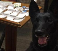 K-9 dies after collision that injured Kentucky sheriff's deputy, two others