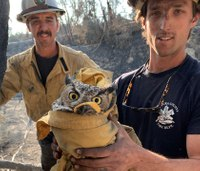 Photos: Calif. firefighters rescue owl during Maria Fire