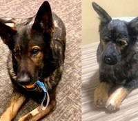 Video: Wash. family gives officer stuffed facsimile of fallen K-9