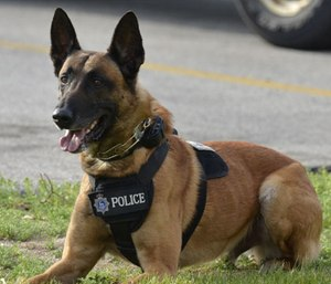 Veterinarian Paul McNamara's Odin's Fund is a nonprofit that teaches first responders how to treat police dogs that are injured on the job. (Photo/Green Bay Police Dept.)