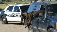 Photo of the Week: K-9 training wheels