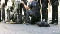How robots can keep K9s and officers safer in SWAT operations