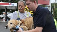 Service dog throws self in front of bus to protect blind owner