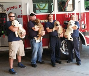 Hero Pups started placing dogs in 2012 and the rest, as they say, is history.