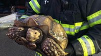 Photo of the Week: 150-year-old tortoise rescued from blaze