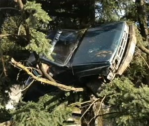 Crews were called for a report of a truck wrapped around a tree ... 10 feet up.