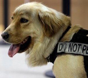Bella, a bomb-sniffing dog, wears a