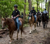 Program uses horses to ease veterans' PTSD