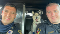 Cops rescue dog from hot car after owner is killed by gunman