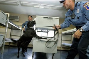 New Jersey corrections officer Joseph Nicholas encourageshis dog, Izzy, to find a hidden cell phone in a training room at the Albert C. Wagner Youth Correctional Facility in Bordentown, N.J. (AP Photo/Mel Evans, File)