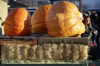 Cities Can Have Pumpkin Cake & Eat It, Too: Fall Festivals Profit Guide