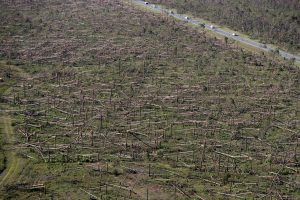 downed trees are seen from the air on Tyndall Air Force Base in the aftermath of Hurricane Michael near Mexico Beach, Fla.