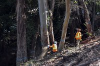 Forest Thinning to Stop Wildfires Only as Strong as Weakest Link: Homeowners