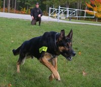 K-9 deployment with a carbine: Training for the extreme