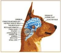 Dog psychology: A vital training tool