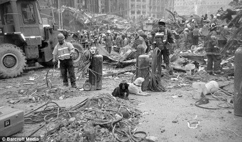 RescueDogs at Ground Zero