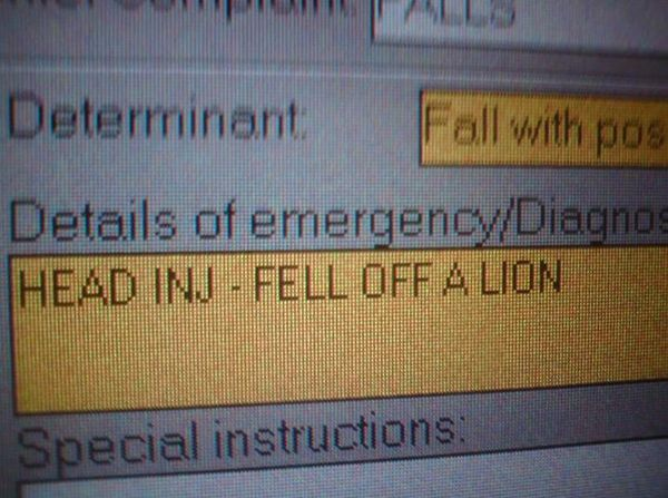 funny real ems calls, fell off lion