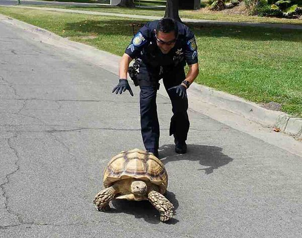 cool things unique to police life, cop helping tortoise