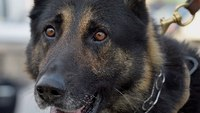 Why your correctional facility should have a K-9
