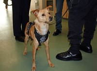 Shelter dog turned K-9 featured in new PBS series