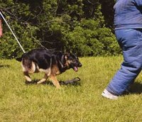 Using your K-9's play drive in bite work