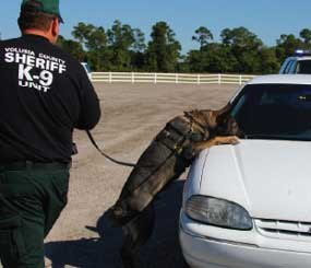 The questions of how a detector dog's reliability may be proven and what that reliability means in terms of providing probable cause for a vehicle search will be considered by the U.S. Supreme Court this fall.