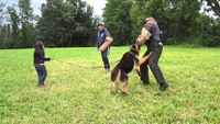 K9 Training: K-9 protects 5-year-old from bad guys