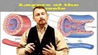 Understanding shock compensation