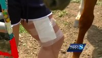 New item on air ambulance saves girl after horse accident