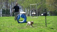 Dogtra BALL TRAINER - Agility Training