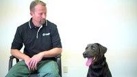 Dogtra BALL TRAINER - Service Dog Training