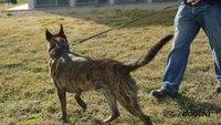 Ep.5 - K9 Dog Training with Mike Ritland: Body language