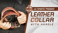 Ultimate Padded Leather Dog Collar with Handle