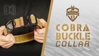 Cobra Buckle Dog Collar - 4000lb Weight Tested