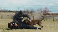Ep.7 - K9 Dog Training with Mike Ritland: Bite Training