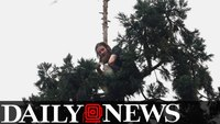 Man Builds A Bed In An 80 Foot Sequoia Tree In Downtown Seattle