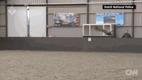 Dutch police use hawks to catch drones
