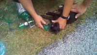 Firefighter rescues cat