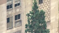 Seattle police try to rescue man in 80-foot tree