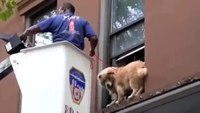 Dog Stranded on Window Ledge Gets Rescued by Firefighter