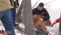 Firefighters rescue 3 dogs from icy river
