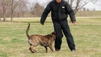 Final Episode - K9 Dog Training with Mike Ritland