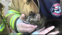 Midwest City Firefighters Rescue Dog and Cat From Structure Fire