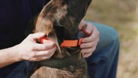 Ep.1 - K9 Dog Training with Mike Ritland: Buying an e-collar