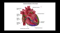 How to recognize left bundle branch block