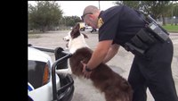 Tampa police K-9 teaches cell phone theft prevention