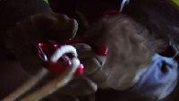 Sterling Rope - Lightning Hook