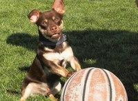 Dog agility equipment donated to Idaho DOC dog training program