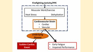 Figure 3. Smith and her team found that cardiovascular strain can: (1) lead to a suddencardiac event (SCE) in vulnerable individuals with underlying cardiovascular disease; and (2) lead to fatigue and impaired performance in all firefighters. (figure created by Robert Avsec).